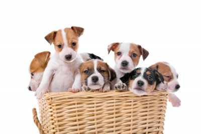 Are The Puppies In The Middle? featured image